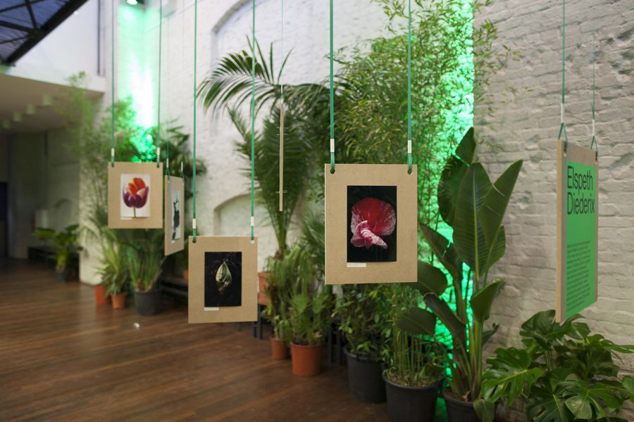 Image of Let it Grow - Pop-up store